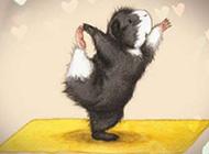 做瑜伽的仓鼠搞笑动漫手绘