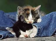 动物种族间饱含情感的高清图片