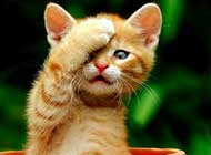 搞笑卖萌的小猫咪