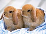 超可爱的小兔子卖萌图集