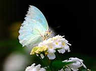 侧面美丽的蝴蝶图片大全