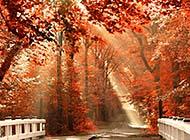 阳光穿透森林唯美意境风景图片