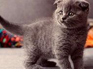 淘气搞怪的猫咪图集