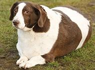 每日爆笑 胖胖的动物