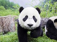 唯美可爱的动物世界摄影图片