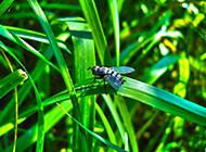 无聊拍苍蝇超高清图片