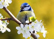 唯美春天意境高清鸟类摄影图片
