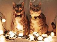 可爱猫咪呆萌趣怪精选搞笑图