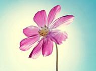 唯美春天鲜花风景图片壁纸