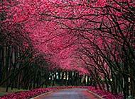 如梦如幻的大自然风光高清桌面壁纸
