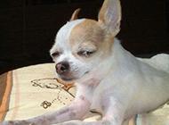 狗狗的表情完美诠释什么叫藐视