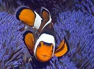 海底动物:热带鱼