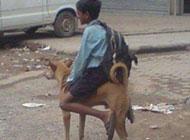 狗狗爆笑图片之我的新坐骑