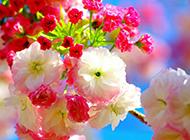 春天植物风景唯美小清新