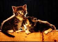 可爱猫咪精美卖萌高清图集