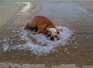 炎炎夏日给狗狗降温的最好办法