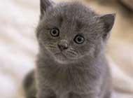 可爱慵懒的猫咪高清图集
