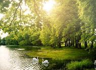 小清新树林美景壁纸赏析