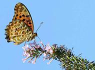 飞舞的花蝴蝶图片 田野风景美图