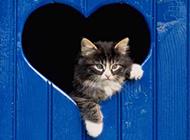 可爱活泼的动物高清摄影图片