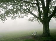 云雾缭绕的美丽树林风景