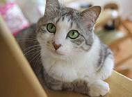 好奇敏感的猫咪生活篇高清图片
