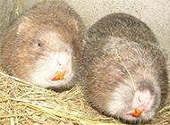 竹鼠鼠舍干净简易图片