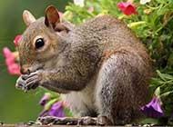 高清可爱小动物图片欣赏