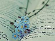 鲜花风景图壁纸浪漫唯美