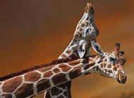 大自然聪明的动物壁纸大全