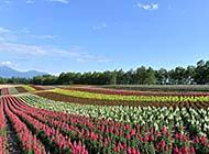 日本北海道景色优美风光组图