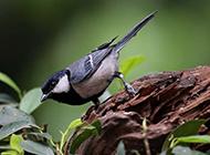常见野生鸟类图片特写