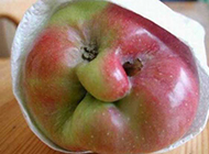 水果恶搞图片之巫婆苹果