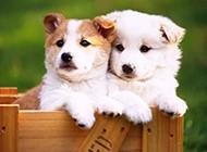 可爱相亲相爱的动物壁纸