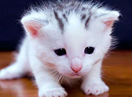 可爱动物卖萌趣图精选