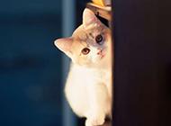 精选可爱小猫咪图片大全