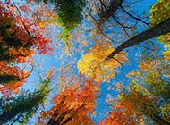 秋天树叶风景图片唯美摄影素材分享