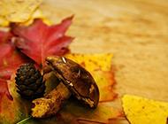 秋天红枫叶唯美浪漫景色高清图片