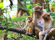 在山上惹人喜爱的猴子一家高清组图