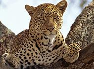 野生动物合集狮子老虎尽在其中