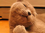 二货猫咪搞怪表情图片之睡了个懒觉