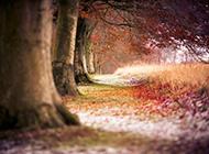 优美森林风景图片高清壁纸