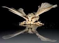 蚕蛾昆虫高清生活写实图片