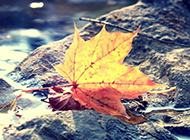 秋天落叶唯美图片壁纸下载
