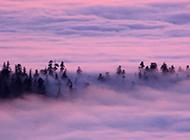 云雾缭绕的树林风光壁纸欣赏