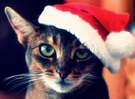 可爱猫咪圣诞节主题壁纸