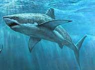 海中描写 鲨鱼
