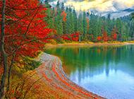 秋天美丽树林精美摄影图片