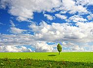 蓝天白云绿草地高清图片