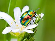 家庭常见昆虫高清图片